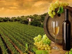Ростовская область развивает винный туризм