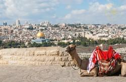 Израильских верблюдов оснастят GPS