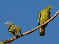 Птички Тая и Лаоса
