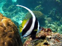 Подводный мир Ко Тао