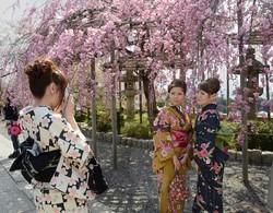 Сакура в Японии зацвела на пять дней раньше