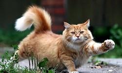 Кот получил работу в музее Серпухова