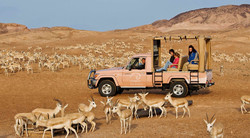 В Абу-Даби открылся сафари-парк