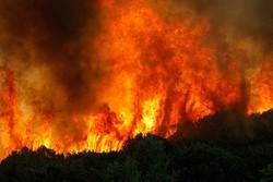 Два человека погибли в лесном пожаре на Кипре