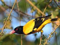 Птицы Шри-Ланки
