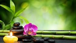 В Шереметьево открылись салоны тайского массажа