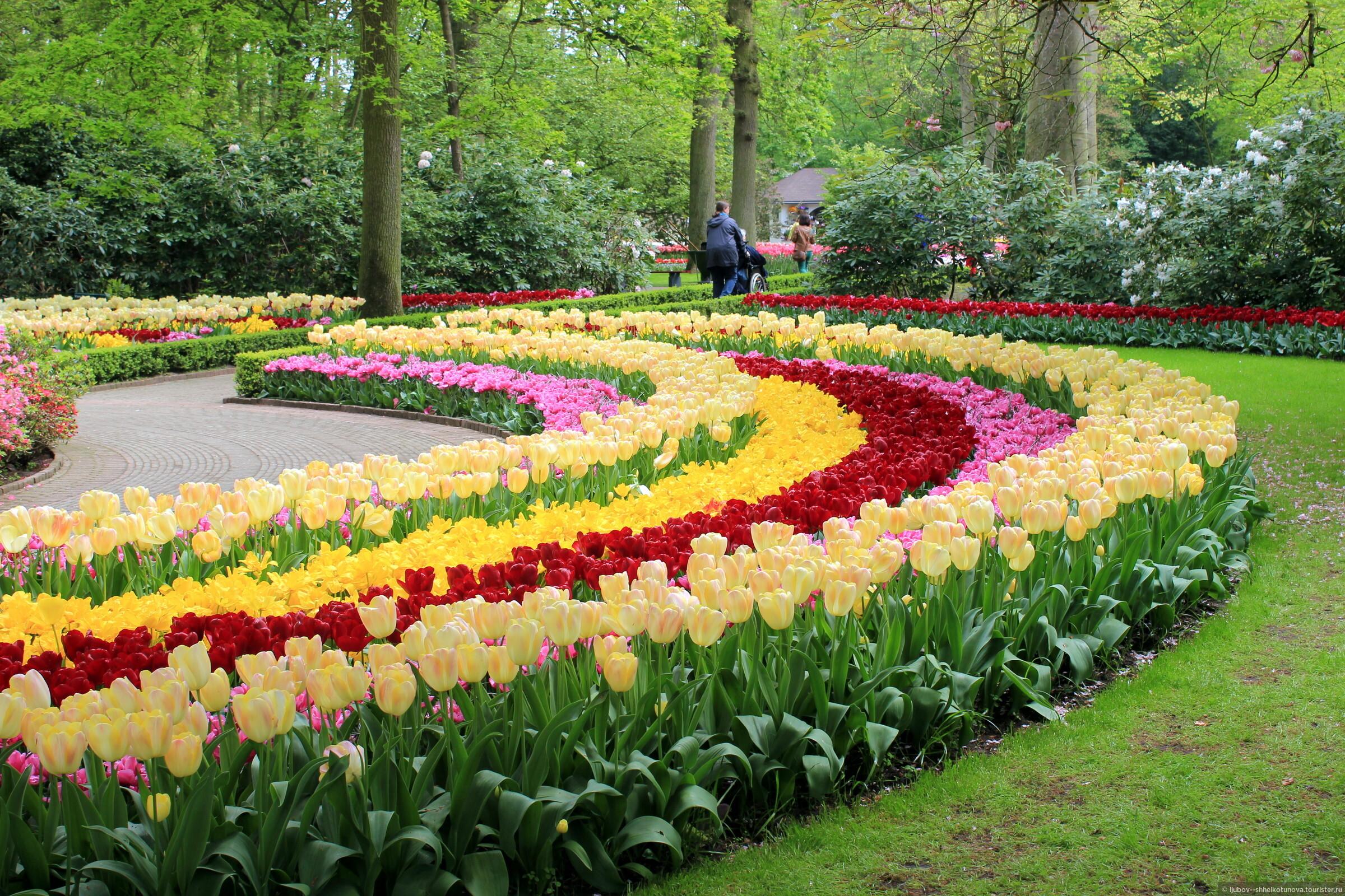 Седум, очиток цветы. Фото 31