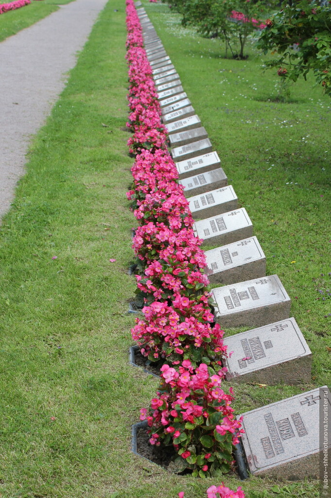 Какие растения сажают на кладбище фото 60