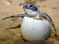 Яйца черепах задержали возвращение самолета в Москву