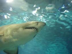 Зоопарк Варшавы заведет акул