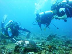 Дайвинг на Мальдивах: особенности, школы, места погружений