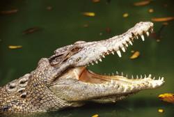 Американскую туристку убил крокодил