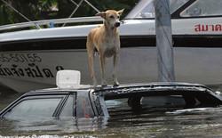 Жители Бангкока требуют затопить центр города