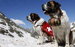 В Швейцарии  накануне приняты забавные законы