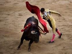 Каталония таки ввела запрет на корриду