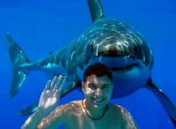 Туристам снова разрешили купаться в акульих водах