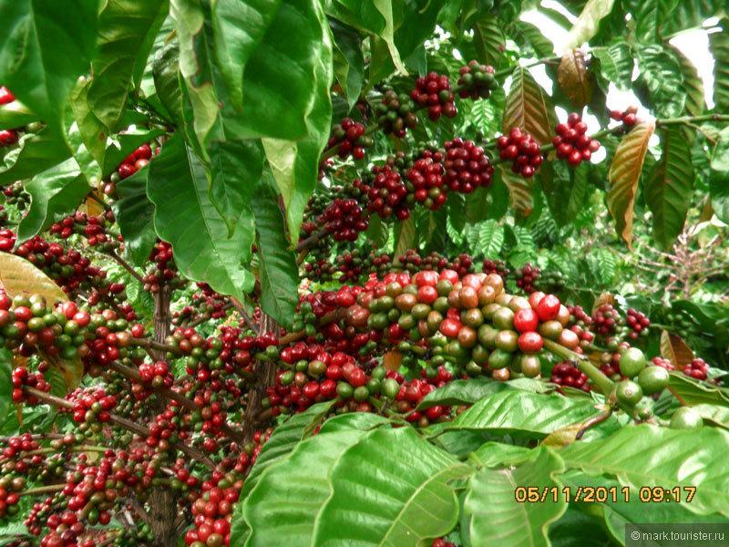 Чашечка вьетнамского кофе