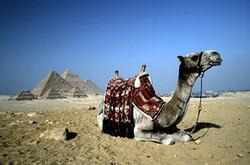 Египет снова набрал популярность у россиян