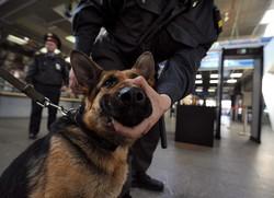 Россиян начнут не совсем законно досматривать на вокзалах
