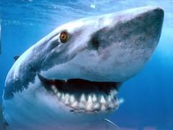 Пляжи Ниццы, закрытые из-за атаки акулы, вновь открыты