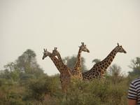 Красными дорогами Африки (Уганда, Мерчисон)
