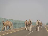 Арабское транзитное путешествие
