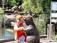 Австрия Инсбрук Альпийский зоопарк 2008