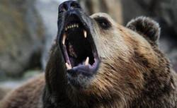 Медведь устроил переполох на смотровой площадке в столице Камчатки