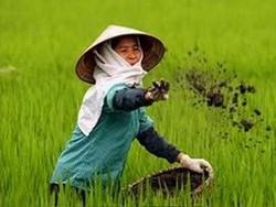 Вьетнам ввел новые налоги для туристов