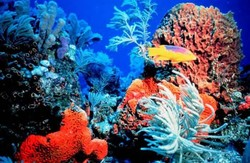 Коралловые рифы в... Польше