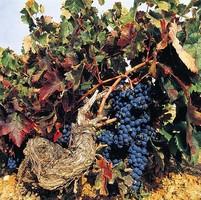 Испанские виноделы приглашают на отдых