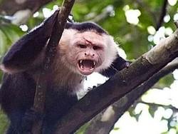 Тайландские обезьяны нападают на жилые дома