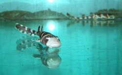 На чешской выставке прибавилось акул