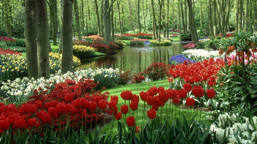 картинки на рабочий стол цветы самые красивые № 517001  скачать