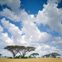 В Кении появится новая достопримечательность для любителей дикой природы