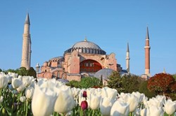 На улицах Стамбула высадят 20 миллионов тюльпанов
