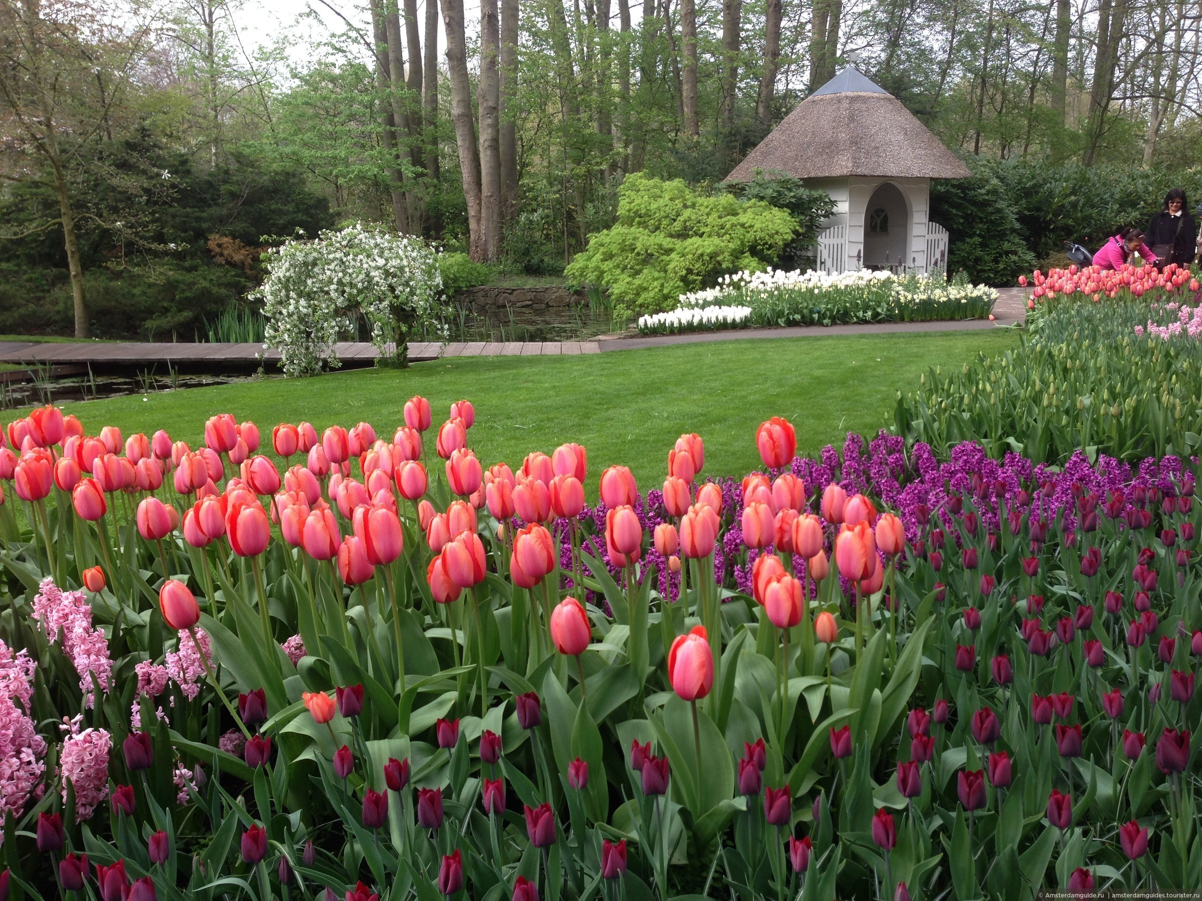 Парк цветов кейкенхоф фото