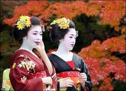 Во Вьетнаме пройдет Фестиваль японской культуры