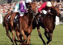 В Вероне пройдет конная ярмарка