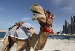 Роспотребнадзор советует туристам избегать встреч с верблюдами