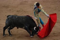 В Испании впервые за 35 лет отменили корриду