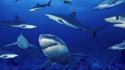 В США пляжи Мексиканского залива атакуют акулы