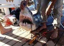 В Шарм-эль-Шейхе акулой растерзана насмерть очередная туристка