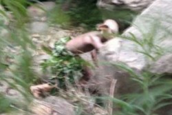Китайский путешественник сфотографировал в горах Голлума из «Властелина колец»