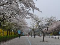 Сеул, день шестой. Гранд парк.