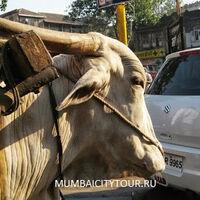 Mumbai City Tour (mumbaicitytour)