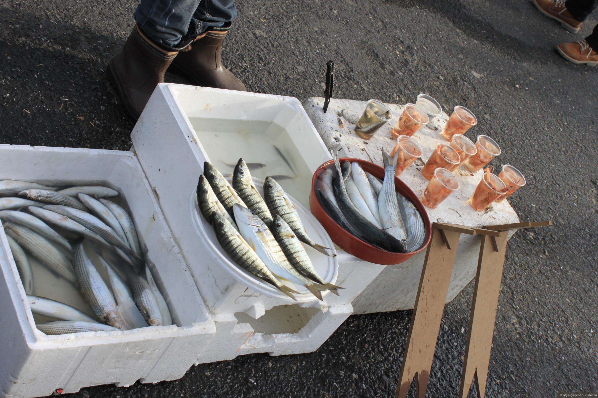 Как сделать приманку для рыбы своими руками