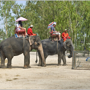 Как мы попали в гости к слонам (Таиланд)
