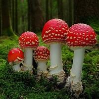 В саду королевы Великобритании обнаружили галлюциногенные грибы
