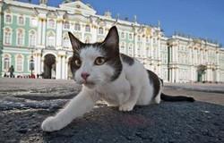 В Петербурге раздают кошек Эрмитажа